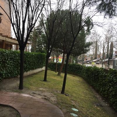 Jard n ardales aravaca madrid madrid habitissimo for Disenar jardines online gratis