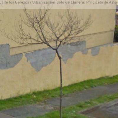 muro1_499240