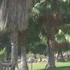 Limpiar de ramas muertas o secas de 10 palmeras