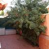 Desbrozar jardín con cortado