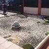 Poner cesped artificial  en un jardin
