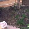 Renovar el jardín remover