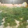 Arreglar el jardín