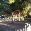 Cortar pino mas de diez metros