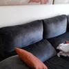 Tapizar sofá y 6 sillas