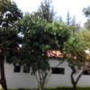 Talar árboles frutales viejos
