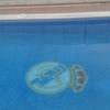 Cubrir piscina de obra en espinardo murcia