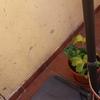 Arreglar patio que salen fugas por cochera