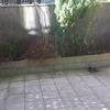 Limpiar jardineras de obra en terraza