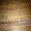 Recuperar un suelo de madera de lindo, q tiene manchas de pintura y ha estado tapado con moqueta durante 30 años