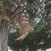 Tala de dos árboles