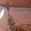 Impermeabilización Parcial Vivienda O Local