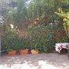 Poner muro en patio para aislar de vecinos, minino 1.80/2.00 metros alto