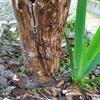 Tratar carcoma y/o termitas