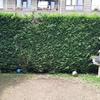 Eliminar 8 pinos de un cierre de jardín
