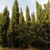 Talar árboles
