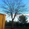 Podar árboles