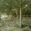 Tirar pinos de 2 parcelas