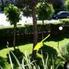 Talar 2 árboles en urbanización