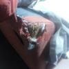 Arreglar  arañazo sofa