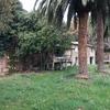 Podar palmeras en vilagacia de arousa
