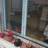 Pintar ventana-balcones