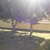 Quitar eliminar 4 pinos que hay en mi jardin