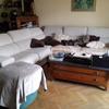 Cambiar relleno de un sofá