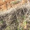 Desbrozar malas hierbas
