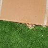 Eliminar avispas y nidos (varios como los de las fotos ) en jardin de unos 20m2
