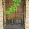 Rejas ventanas casas de san galindo (guadalajara)