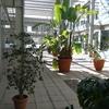 Mantenimiento plantas patio