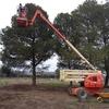 Tratar y podar pinos finca rustica