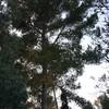 Talar copas de uno o más árboles