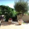 Recortar plantas y olivo