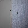 Exterminar termitas
