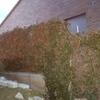 Elevar muro divisorio quitar valla con hiedra poner nueva valla metálica
