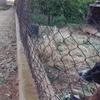 Renovación de valla de malla metálica de simple torsión