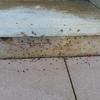 Eliminación hormigas hondarribia