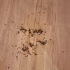 Plaga moscas en grupo