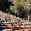 Cambiar tejado chalet 600m2