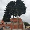 Tala árboles grandes