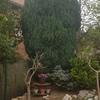 Quitar  3 árboles del jardín