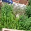 Desbrozar Jardín