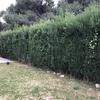 Sanear jardín y podar setos