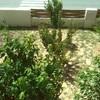 Instalar riego en jardin 11x9