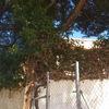 Reparación muro medianero