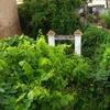 Podar y limpiar jardin