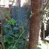 Tirar un árbol del jardín