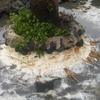 Impermeabilizar proteccion palmera
